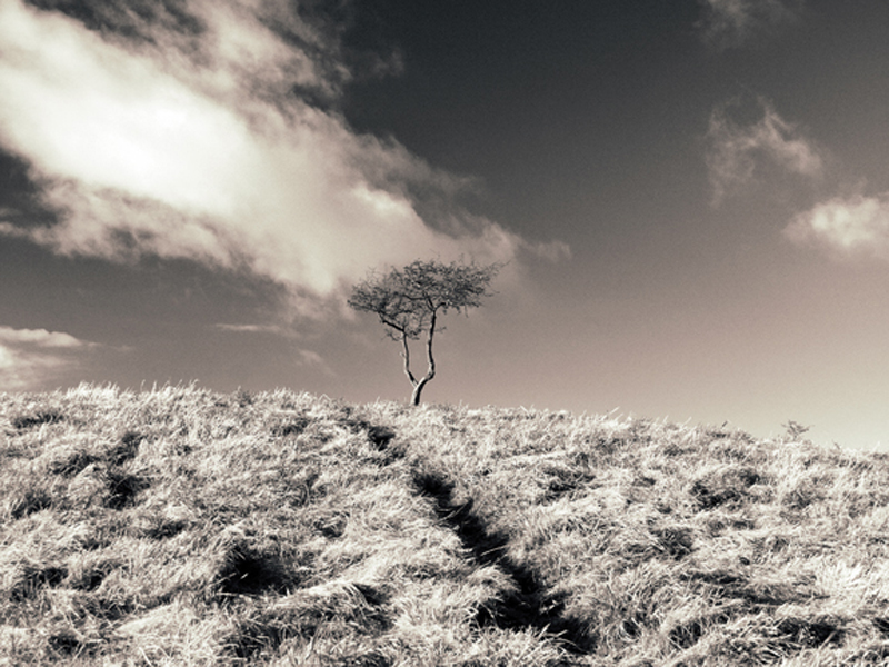 toning in black and white photography