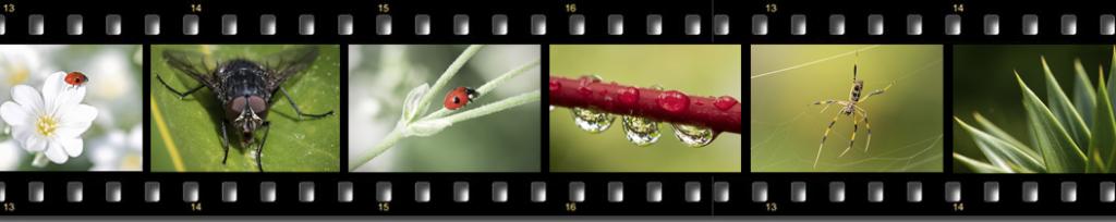 macro photography courses ireland