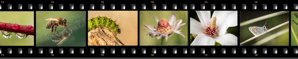 macro photography courses ireland
